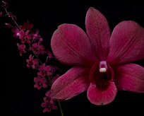 Care and Handling of Orchids